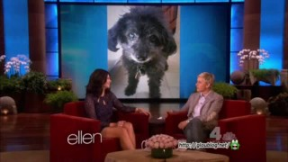 Casey Wilson Interview Mar 01 2013